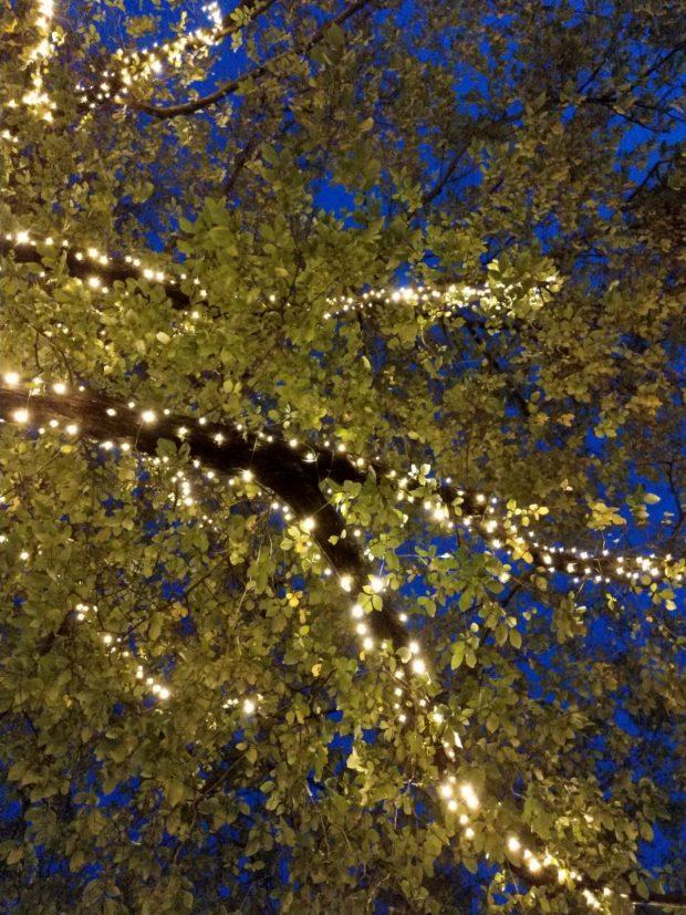 boom verlichten hoe