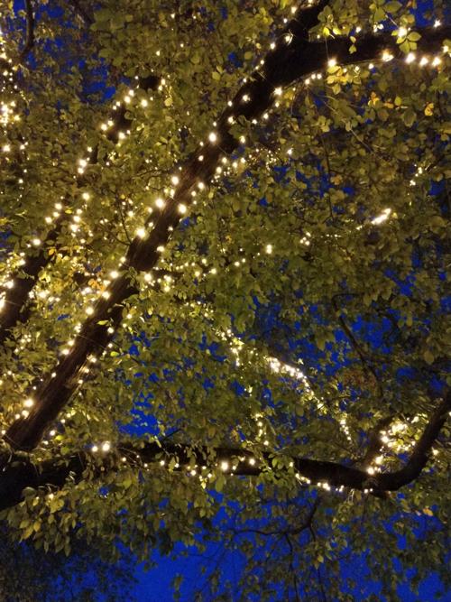 boomverlichting led