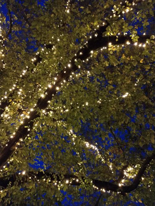 led boomverlichten